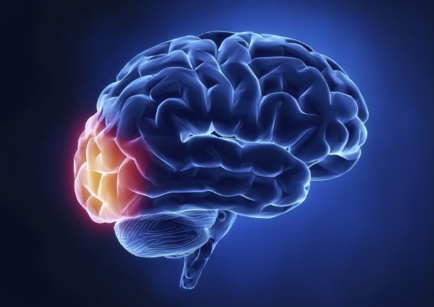 El Poder del Cerebro ! Estupendo Documental !